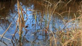 Viem av sjön med träsket stock video