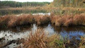 Viem av sjön med träsket lager videofilmer