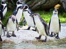 VIENA, ÁUSTRIA - 8 DE SETEMBRO DE 2017 Rebanho dos pinguins no jardim zoológico de Schonbrunn, Viena, Áustria imagem de stock royalty free