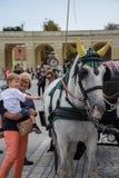 Viena, Áustria, setembro, 15, 2019 - nTourist que toma imagens e que acaricia cavalos do nCarriage no Schonbrunn imagem de stock