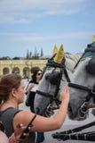 Viena, Austria, septiembre, 15, 2019 - nTourist que toma imágenes y que acaricia caballos del nCarriage en del Schonbrunn foto de archivo libre de regalías