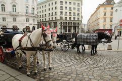 In Vienna. An image of carriages in Vienna Stock Images