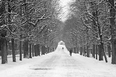 Vienna - alley from gardens of Schonbrun palace Royalty Free Stock Photo