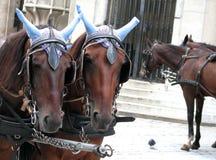 Vienna Austria Royalty Free Stock Photography