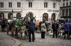 Carriages in Vienna stock image