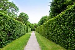 VIENNA, AUSTRIA - MAY 15, 2016: Green labyrinth at schonbrunn garden stock photo