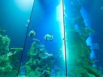 VIENNA, AUSTRIA - SEPTEMBER 8, 2017. Giant panoramic marine fishtank at Haus des Meeres zoo in Vienna, Austria. Giant panoramic marine fishtank at Haus des royalty free stock photos