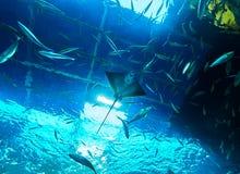VIENNA, AUSTRIA - SEPTEMBER 8, 2017. Giant panoramic marine fishtank at Haus des Meeres zoo in Vienna, Austria. Giant panoramic marine fishtank at Haus des royalty free stock photo