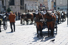 Vienna carriages waiting for tourists Stock Photography