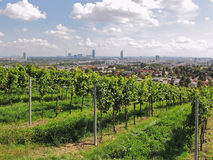 Vienna - City of Wine Royalty Free Stock Photography