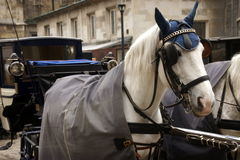 Vienna: horse and carriage Stock Image