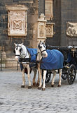 Vienna horses Royalty Free Stock Images