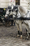 Vienna horses Royalty Free Stock Photos