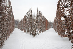 Vienna - live fence from gardens of Schonbrun in winter Royalty Free Stock Images
