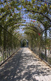 Vienna - tunel of roses in Schonbrunn Royalty Free Stock Images