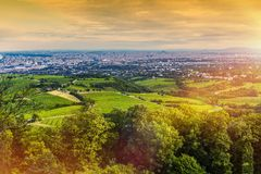 Vienna Vineyards and Cityscape Stock Image