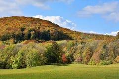 Vienna Woods in autumn Stock Image