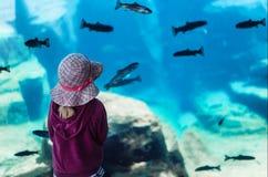 Vienna Zoo Aquarium. Girl looking at fish in Vienna Zoo aquarium Stock Photography