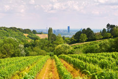 Viennese wine yard Royalty Free Stock Photography
