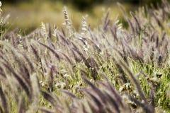 viento Imagen de archivo libre de regalías