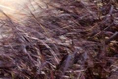 viento Imagenes de archivo