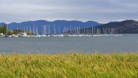 Viento de cabeza llana de los Cattails del lago que azota a Marina Sailboats Montana almacen de video