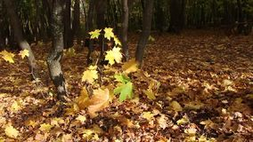Viento de oro en bosque almacen de metraje de vídeo