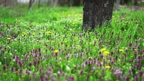 Viento en la primavera a través de las cuchillas de la hierba almacen de metraje de vídeo