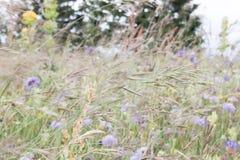 Viento que sopla en campo verde con la lila y las flores púrpuras fotos de archivo libres de regalías
