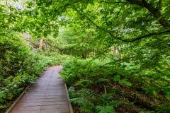Vientos de madera aumentados de un camino del paseo marítimo a través del árbol verde frondoso fotografía de archivo libre de regalías