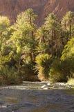 Vientos del río entre el oasis Fotos de archivo libres de regalías