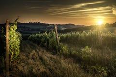 Vienyards at sunset Stock Images