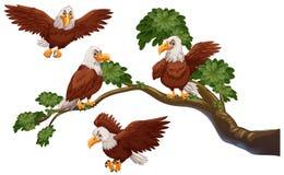 Vier Adler auf der Niederlassung lizenzfreie abbildung