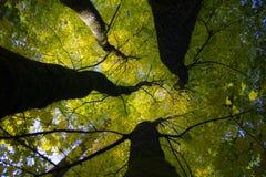 Vier Bäume als einer Stockbilder