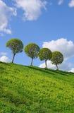 Vier Bäume auf dem Hügel Stockfotografie