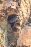 Vier Bienen-Nest, das im Hügel hängt Lizenzfreie Stockfotos