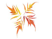 Vier bladeren die in verschillende richtingen op een wit geïsoleerde achtergrond wijzen Stock Foto's