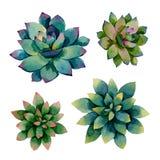 Vier blauwe en groene installaties succulents stock illustratie