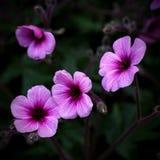 Vier bloemen Royalty-vrije Stock Fotografie