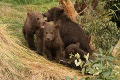 Vier Braunbärjunge, die unter Baum sitzen Stockbild