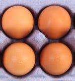 Vier braune Eier im Eikasten Lizenzfreies Stockbild