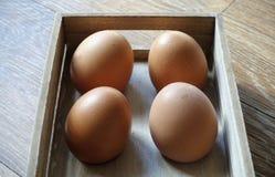 Vier bruine eieren in een houten doos in vensterlicht Stock Afbeelding
