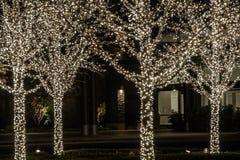 Vier Bäume mit weißen Feiertags-Leuchten Stockfotografie