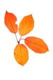 Vier de herfstbladeren Royalty-vrije Stock Fotografie