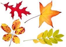 Vier de herfstbladeren Stock Afbeelding