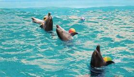 Vier Delphine, die mit Kugeln tanzen Lizenzfreie Stockbilder