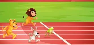 Vier dieren die een race doen Royalty-vrije Stock Afbeelding