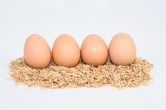 Vier Eier mit Hülsen Lizenzfreies Stockbild