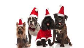 Vier entzückende Hunde der unterschiedlichen Zucht, die Sankt-Kostüme trägt lizenzfreies stockfoto