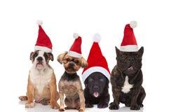 Vier entzückende Sankt-Hunde der unterschiedlichen sitzenden und liegenden Zucht stockfoto